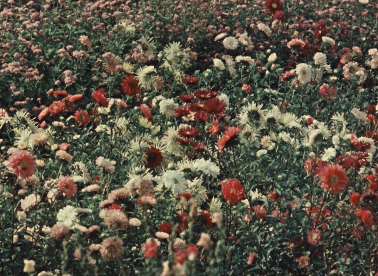 """Fotograma de la película """"Sapovnela"""" de Otar Iosseliani."""