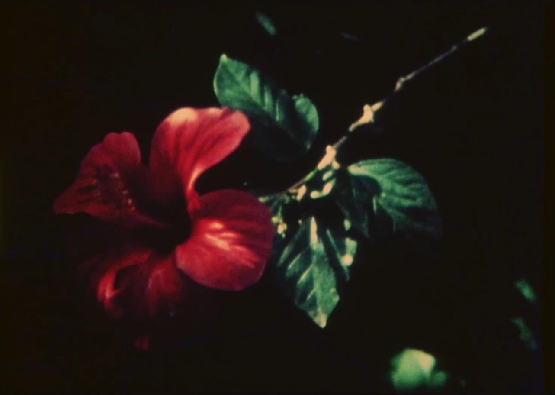 Fotograma del filme Cuarteto de Claudi Caldini.